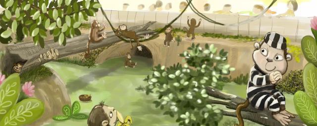 monkeys-plan-nt